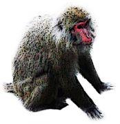 しゃがむ猿