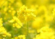 春に咲く花