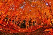 ライトアップされた紅葉の森