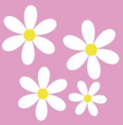 白とピンクのフラワー
