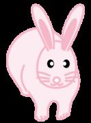 ピンク色の兎