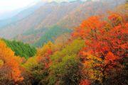 赤や黄色に移り変わる秋の山
