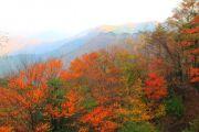 色とりどりの秋山