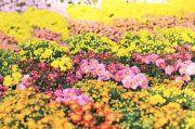 色鮮やかなお花畑