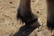 馬の後ろ足の蹄