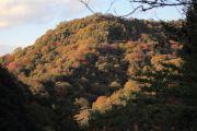 秋色に染まった山