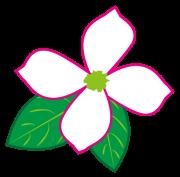 白色の花水木