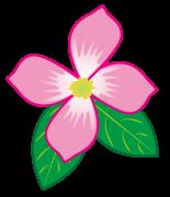 ピンク色の花水木