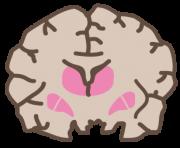 脳を前から見た断面図