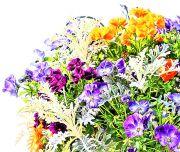 パンジーなど色とりどりの花セット