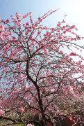 4月ごろ咲く花