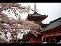 桜と清水寺壁紙