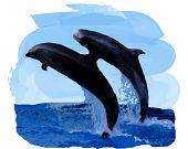 飛び跳ねる2匹のイルカ