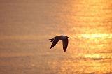 夕日と海ネコ写真